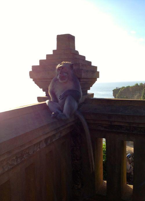 Ulu Watu Bali Monkeys