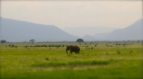 African Elephant Tsavo Park